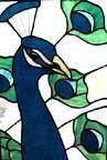peacock424